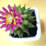 100均ダイソーの模造植物はお手入れ簡単で抜群に癒されます